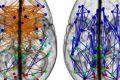 Donna e Uomo, la sfida cerebrale